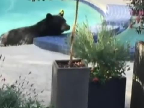 bear relaxing in hot tub