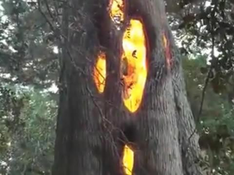 tree burning from the inside out