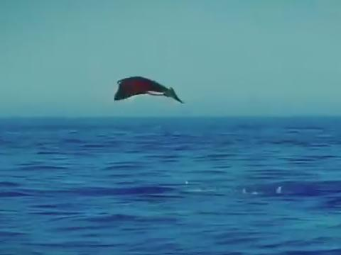 stingrays attempting to fly