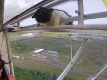Cat Gets Free Airplane Ride