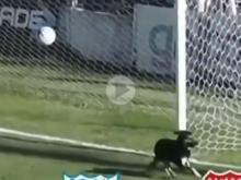 Dog Saves Goal